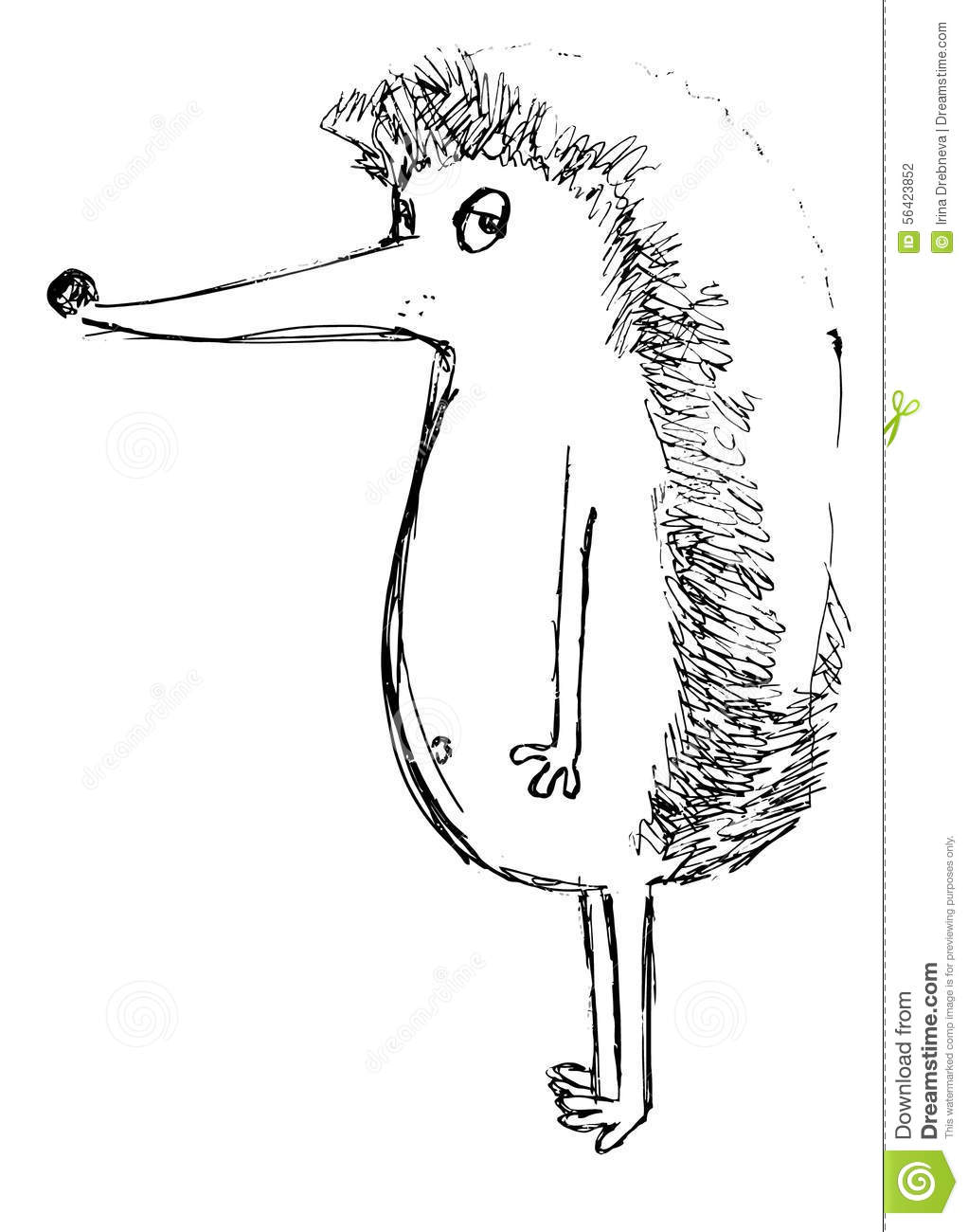 The Outline Of A Hedgehog On A White Background Stock