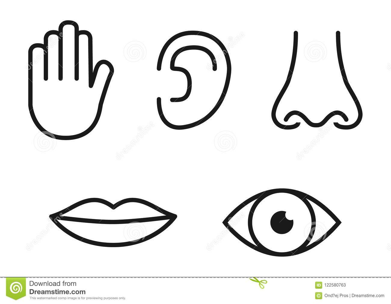 Outline Icon Set Of Five Human Senses Vision Eye Smell Nose Hearing Ear Touch Hand Taste