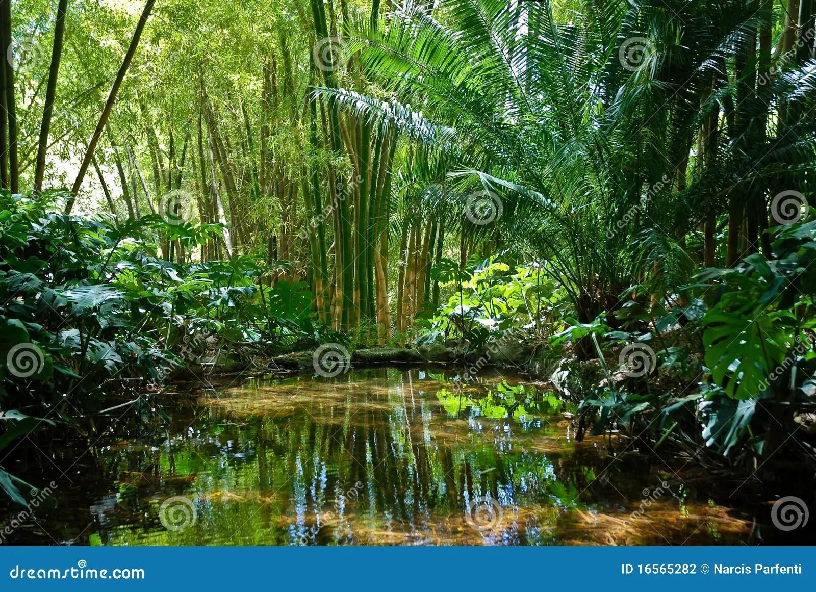 Paesaggio 2 della giungla fotografia stock Immagine di luce  16565282