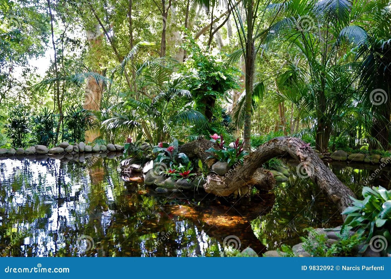 Paesaggio Della Giungla  Stagno Fotografia Stock  Immagine di avventura flusso 9832092