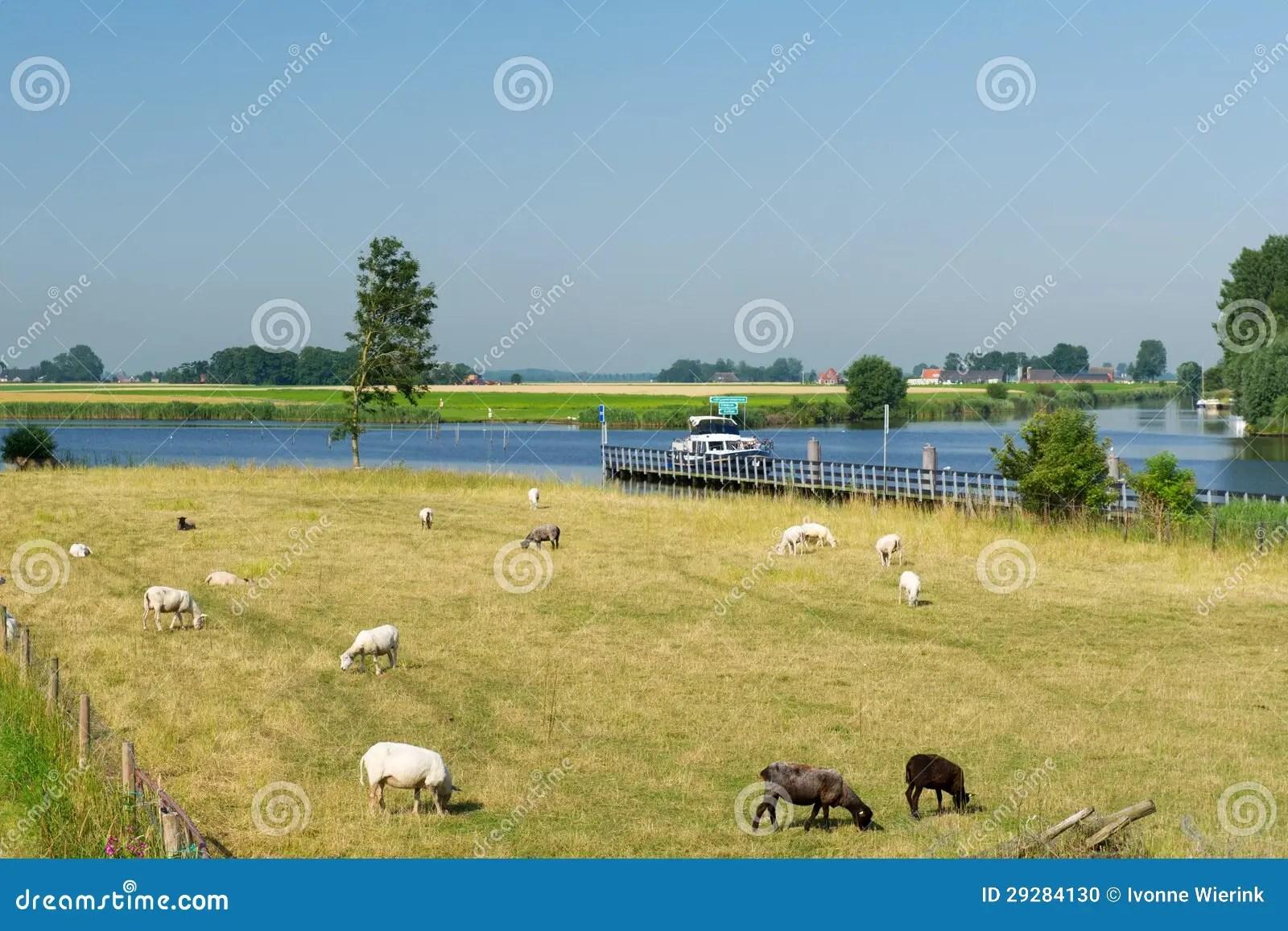 Paesaggio Olandese Con I Crogioli E Le Pecore Di Acqua