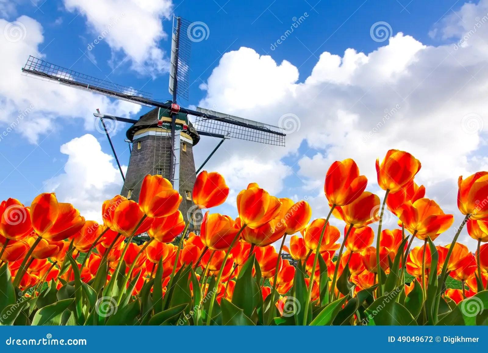 Paesaggio Olandese Del Mulino A Vento Del Tulipano