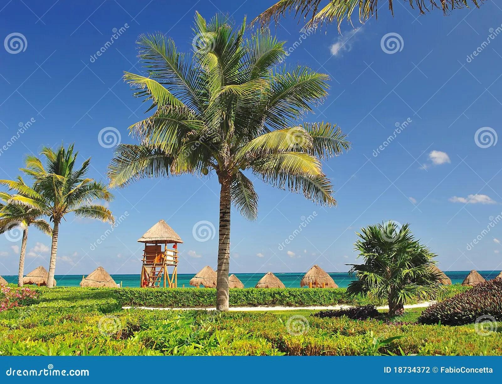 Paesaggio Tropicale Fotografia Stock  Immagine 18734372