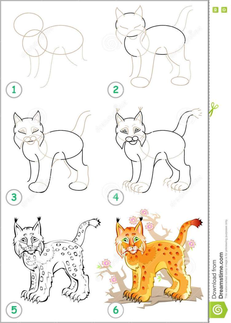 Page Shows How To Learn Step By Step To Draw A Lynx. Stock ...