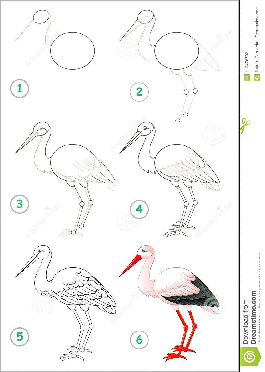 Page Shows How To Learn Step By Step To Draw A Stork