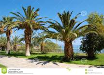 Palm Trees Luxury Hotel Royalty Free Stock