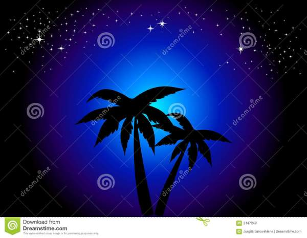 palm trees night stock vector