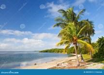 Palm Trees Ocean And Blue Sky Tropical Beach Stock