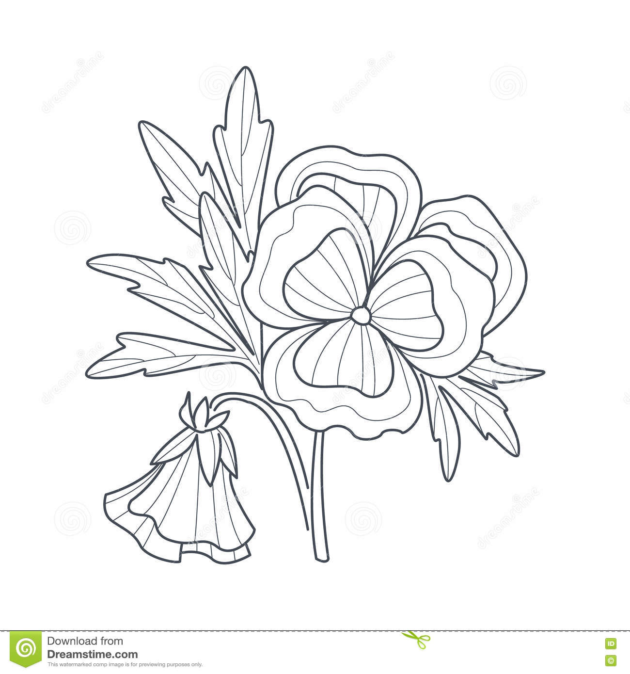 Pansy Flower Monochrome Drawing For Coloring Book Stock