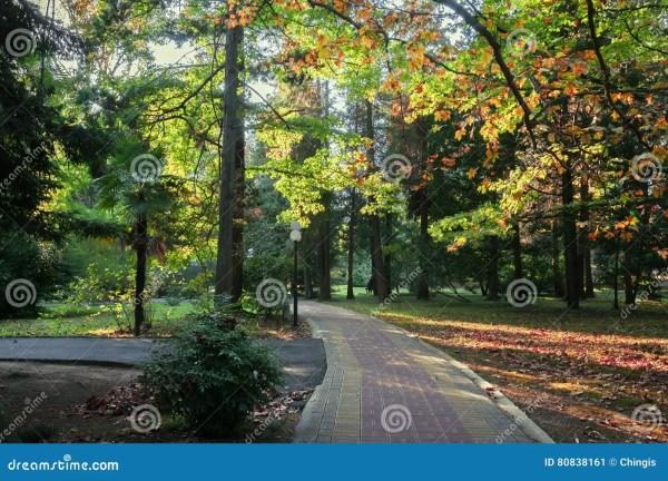 park alley in botanical garden