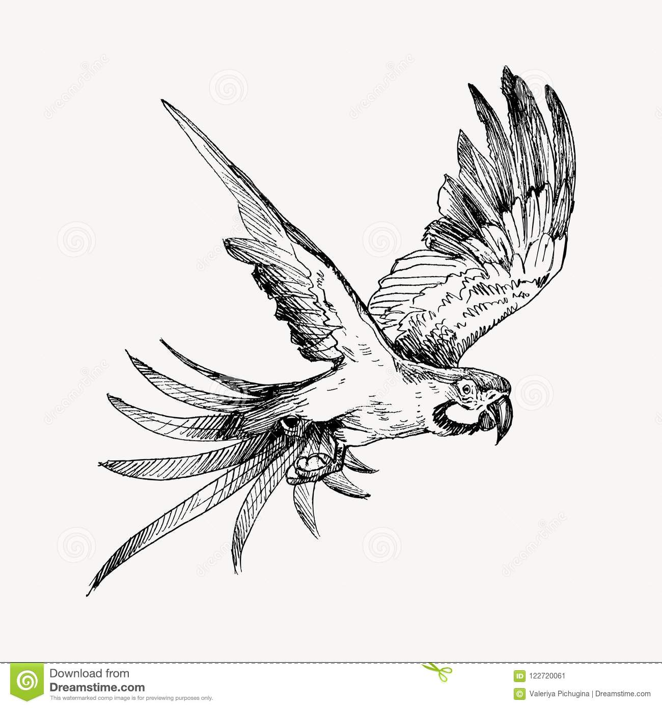 Macaw Clipart