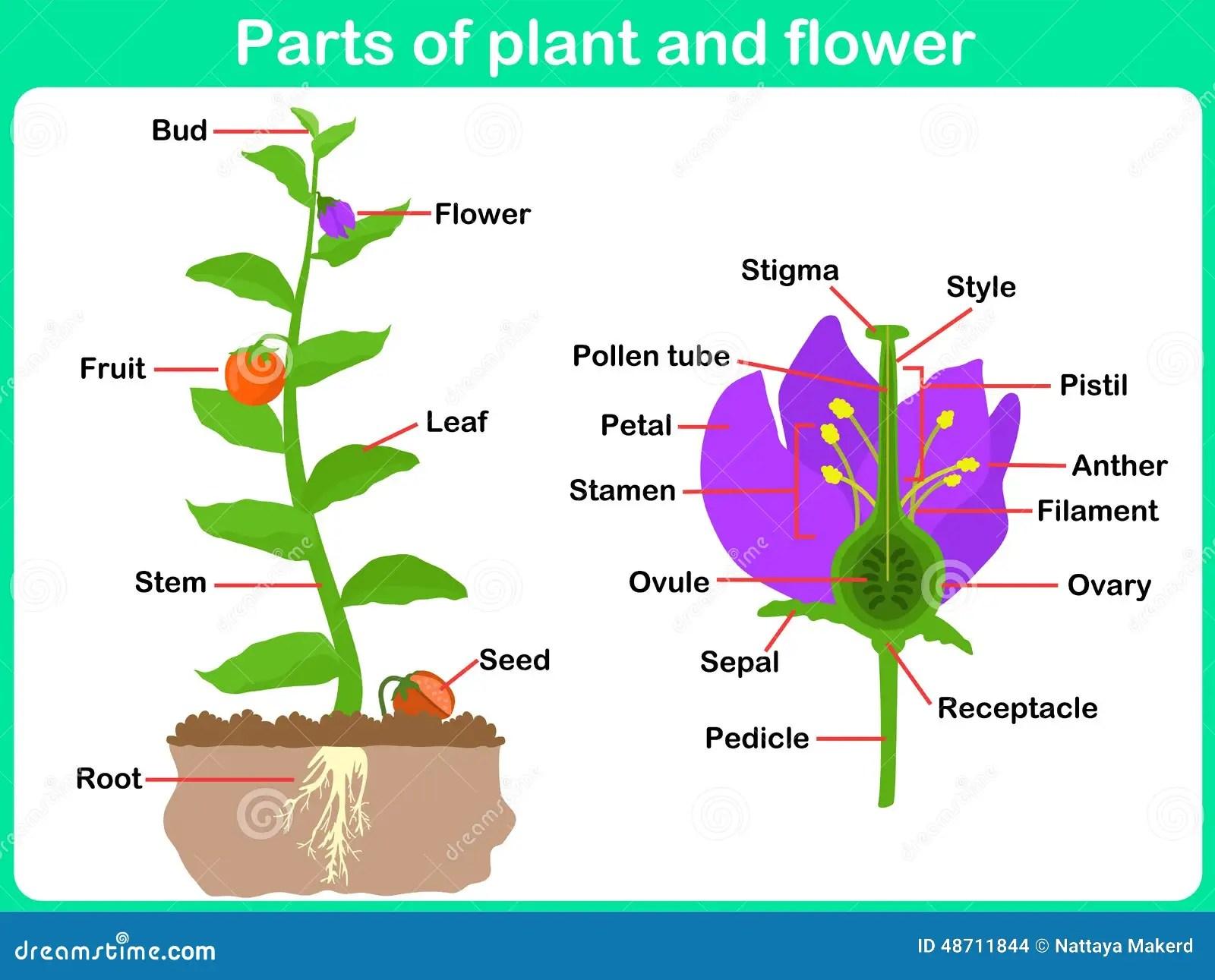 parts of an orange fruit diagram aem wideband parties de penchement plante et fleur pour des