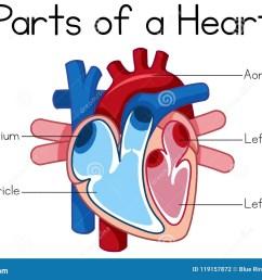 parts of heart diagram [ 1300 x 967 Pixel ]