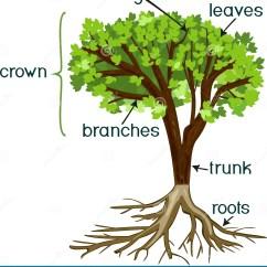 Morphology Tree Diagram Ib Math Studies Venn Diagrams Root Parts Bilderbeste