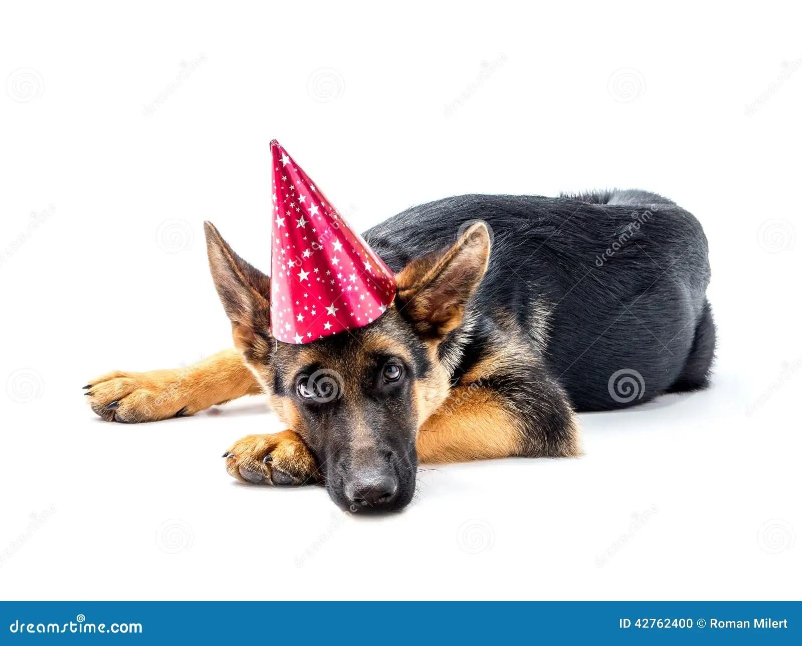 Party Dog Stock Photo Image Of Canine Animal Seasonal