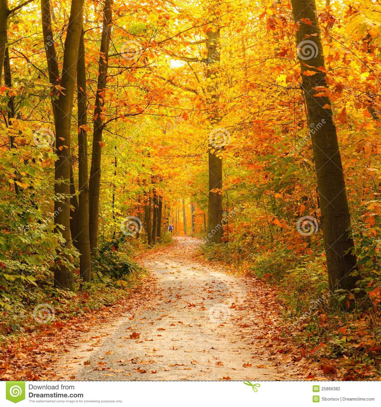 Wallpaper Images Of Fall Trees Lined Lake Pathway In The Autumn Forest Stock Photography Image