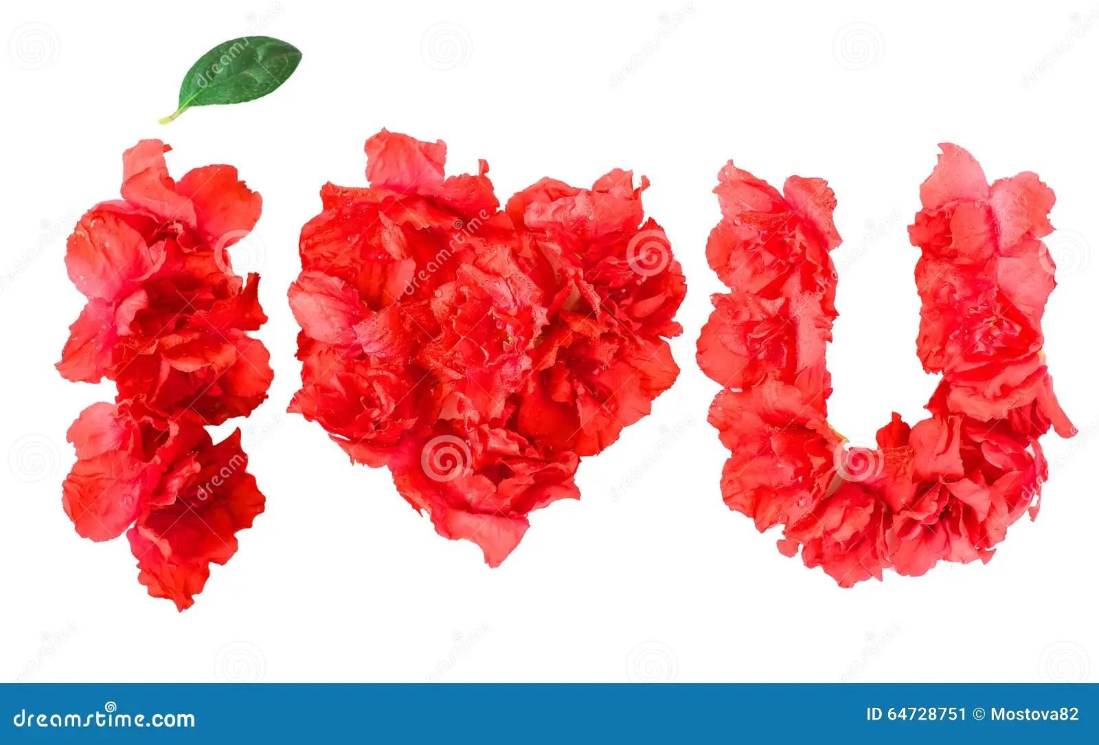 pattern of red azalea