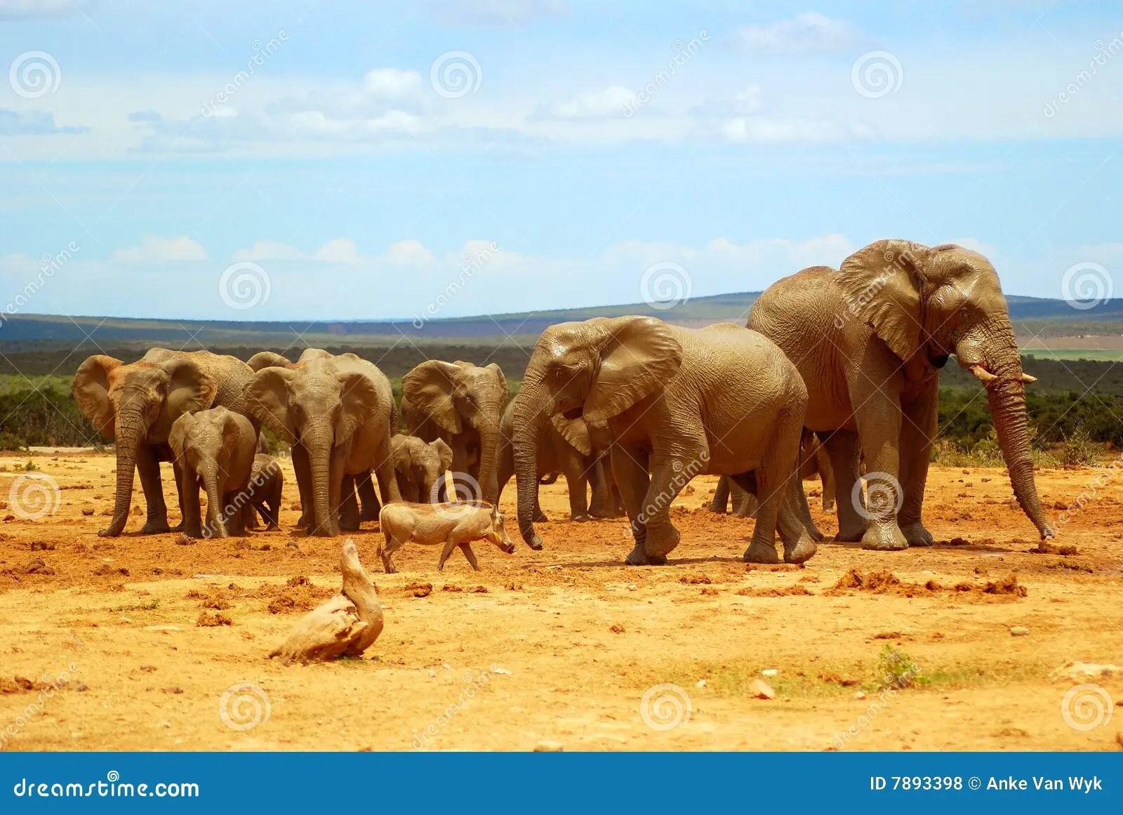 Paysage Africain Photos Libres De Droits Image 7893398