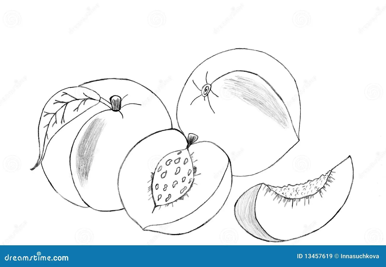Peaches Sketch Stock Illustration Illustration Of Black