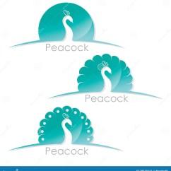 Peacock Bird Diagram Lamp Wiring Label Water Table Elsavadorla