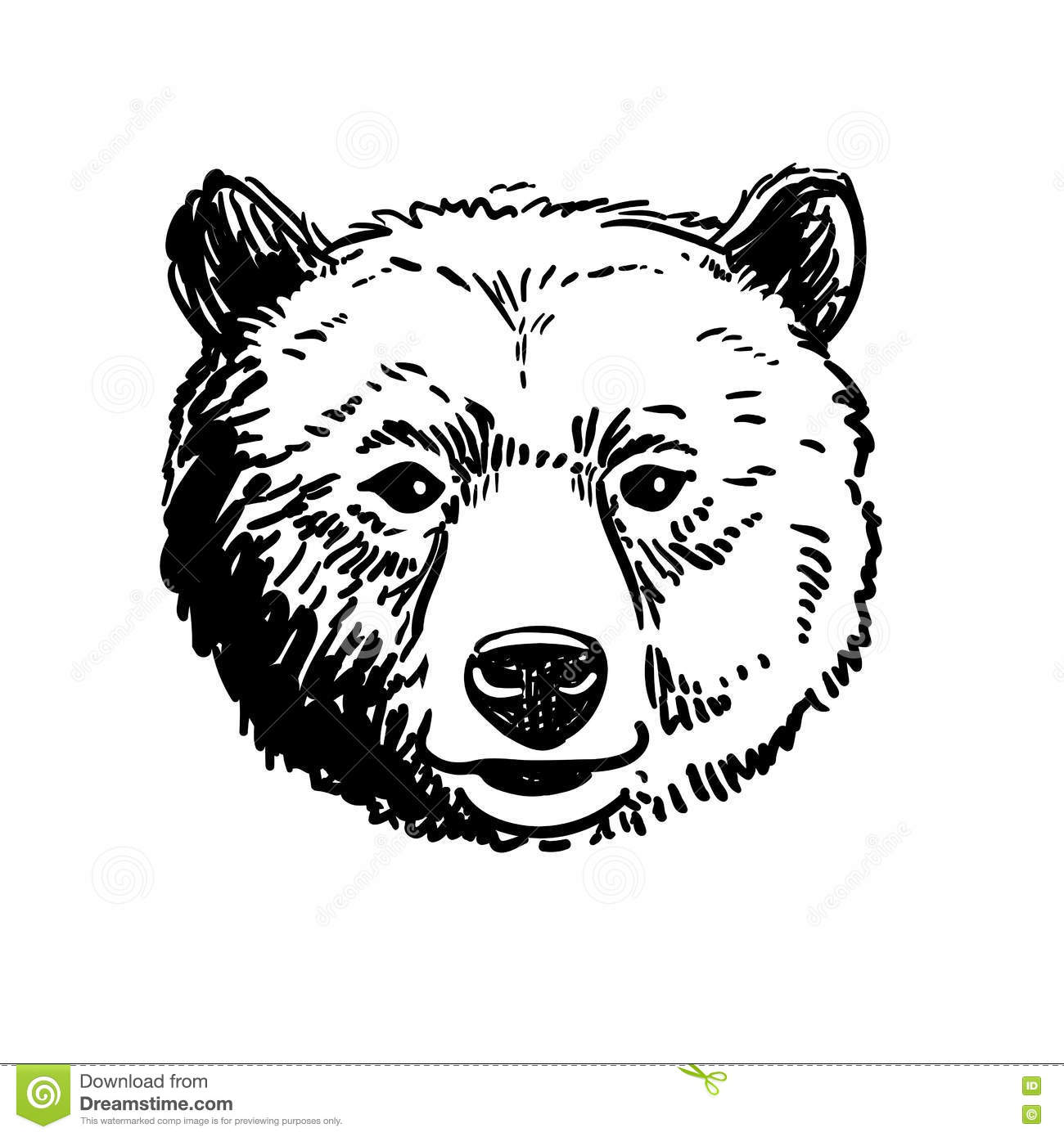 Pen And Ink Sketch Of A Bear Head Stock Vector