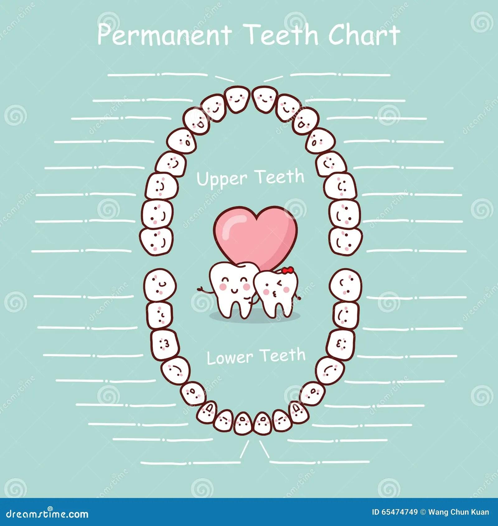 adult tooth diagram triumph tr6 wiring dental chart vector illustration cartoondealer