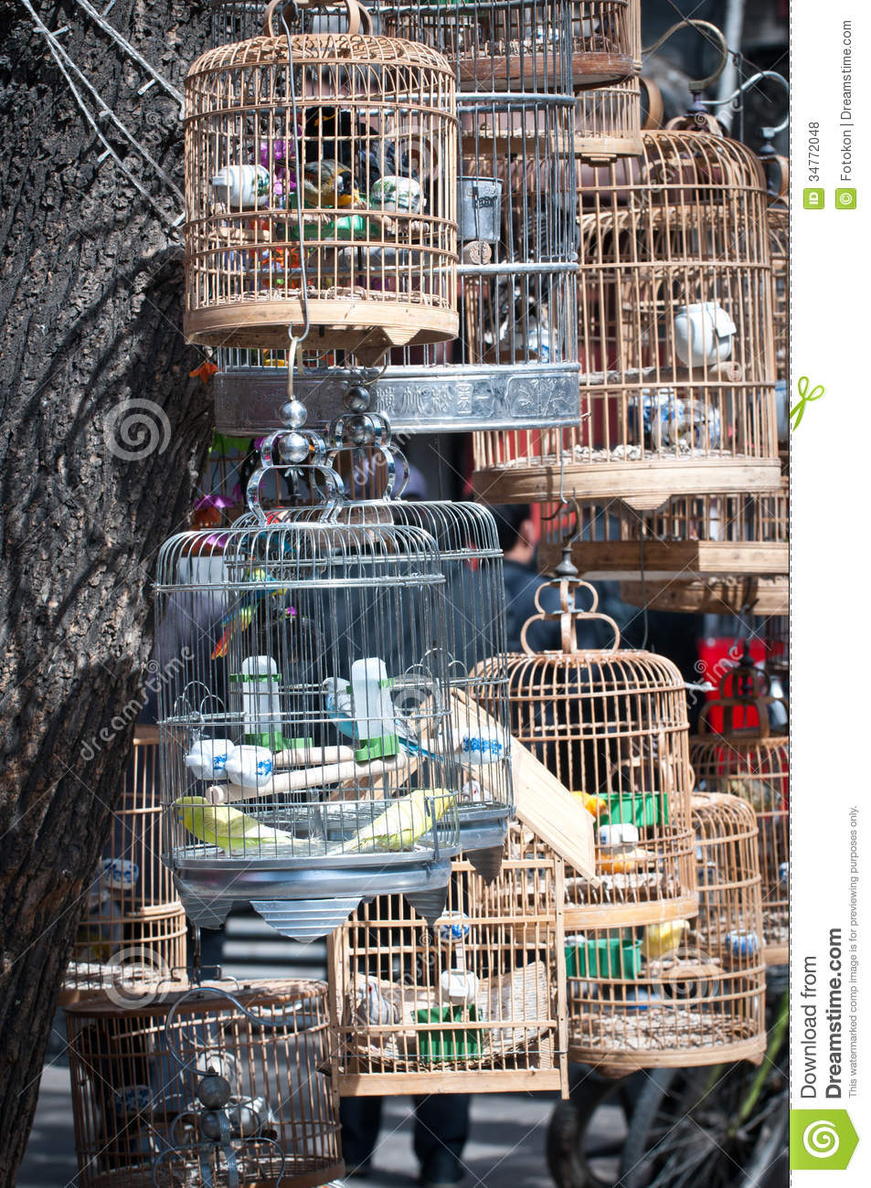 Pet shop stock photo Image of cage shanghai birdcage  34772048