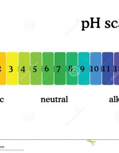 Ph scale diagram with corresponding acidic or alcaline values universal indicator paper color chart also rh dreamstime