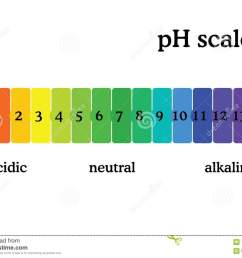ph scale diagram with corresponding acidic or alcaline values universal ph indicator paper color chart [ 1300 x 1009 Pixel ]