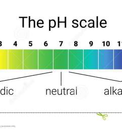 ph scale infographic acid base balance scale for chemical analysis test ph scale diagram [ 1300 x 664 Pixel ]