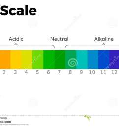 the ph scale universal indicator ph color chart diagram acidic alkaline values common substances vector [ 1300 x 953 Pixel ]
