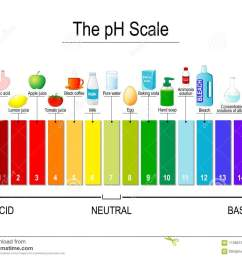 test strips use for track and monitor ph for alkaline and acid levels color vector diagram for educational medical science use [ 1300 x 1069 Pixel ]