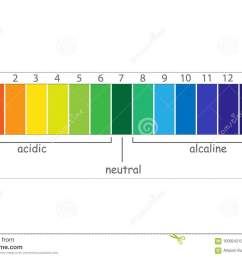 ph scale value chart ph alkaline and acidic scale [ 1300 x 957 Pixel ]