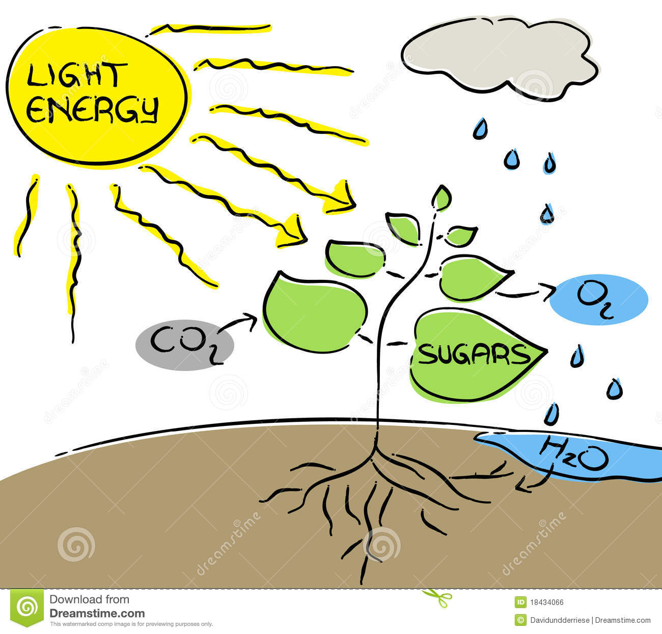 photosynthesis z scheme diagram opel astra h radio wiring stock vector illustration of life