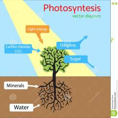 Diagram With Inputs And Outputs Of Photosynthesis Process Typical Vfd Wiring Schematic Vector Illustration