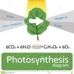Photosynthesis Z Scheme Diagram Hunter Ceiling Fan Light Switch Wiring Schematic Of In Plants Vector Illustration