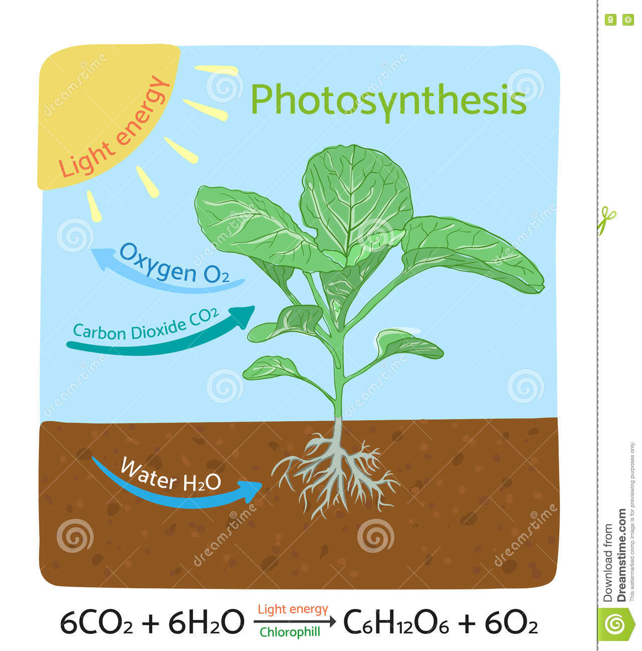 Schematic Of Photosynthesis In Plants Vector Illustration