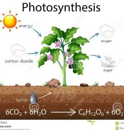 photosynthesis explanation science diagram [ 1300 x 951 Pixel ]