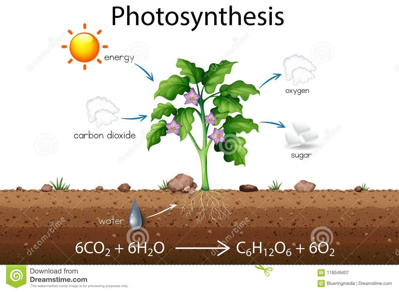 hight resolution of photosynthesis explanation science diagram