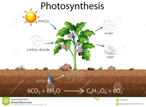 small resolution of photosynthesis explanation science diagram