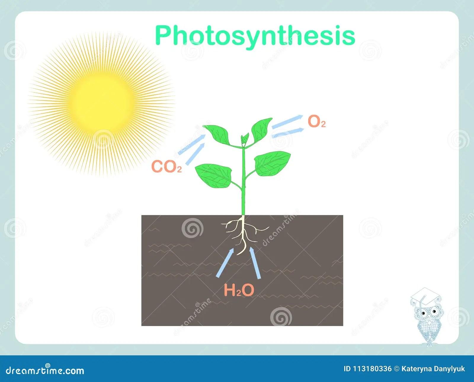 photosynthesis z scheme diagram solar power schematic images stock photos vectors
