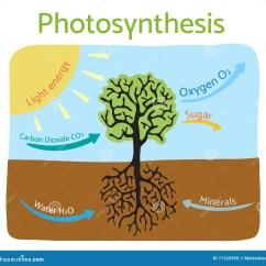 Photosynthesis Z Scheme Diagram Halogen Work Light Wiring Process Schematic Vector