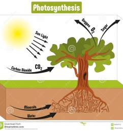 photosynthesis process in plant diagram vector illustration [ 1300 x 1271 Pixel ]