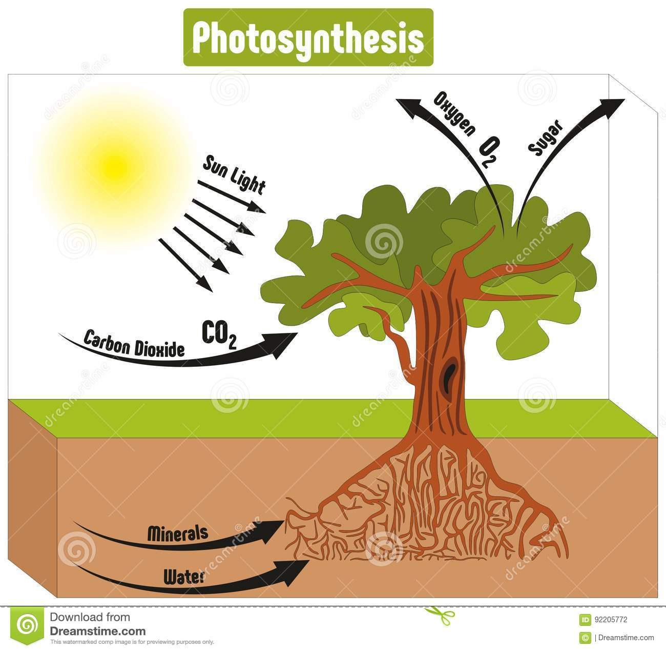 hight resolution of photosynthesis process in plant diagram vector illustration