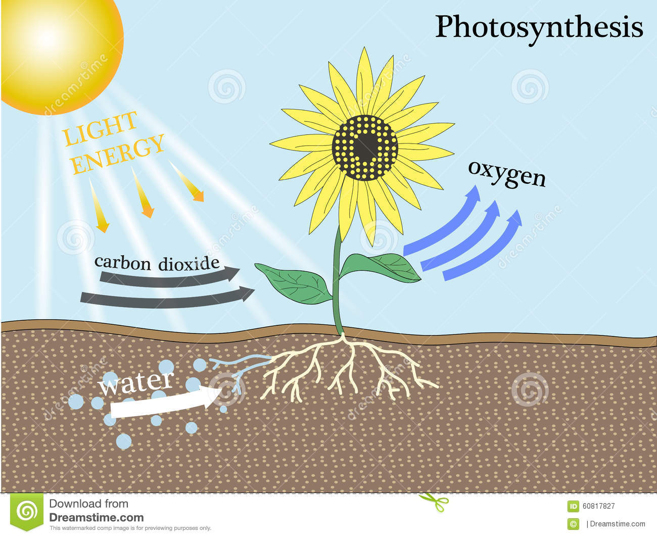 photosynthesis process diagram for 5th grade timer wiring stock vector illustration of research