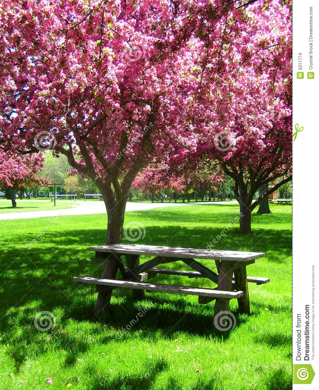 Picnic Table Under Pink Flowering Trees Stock Photo