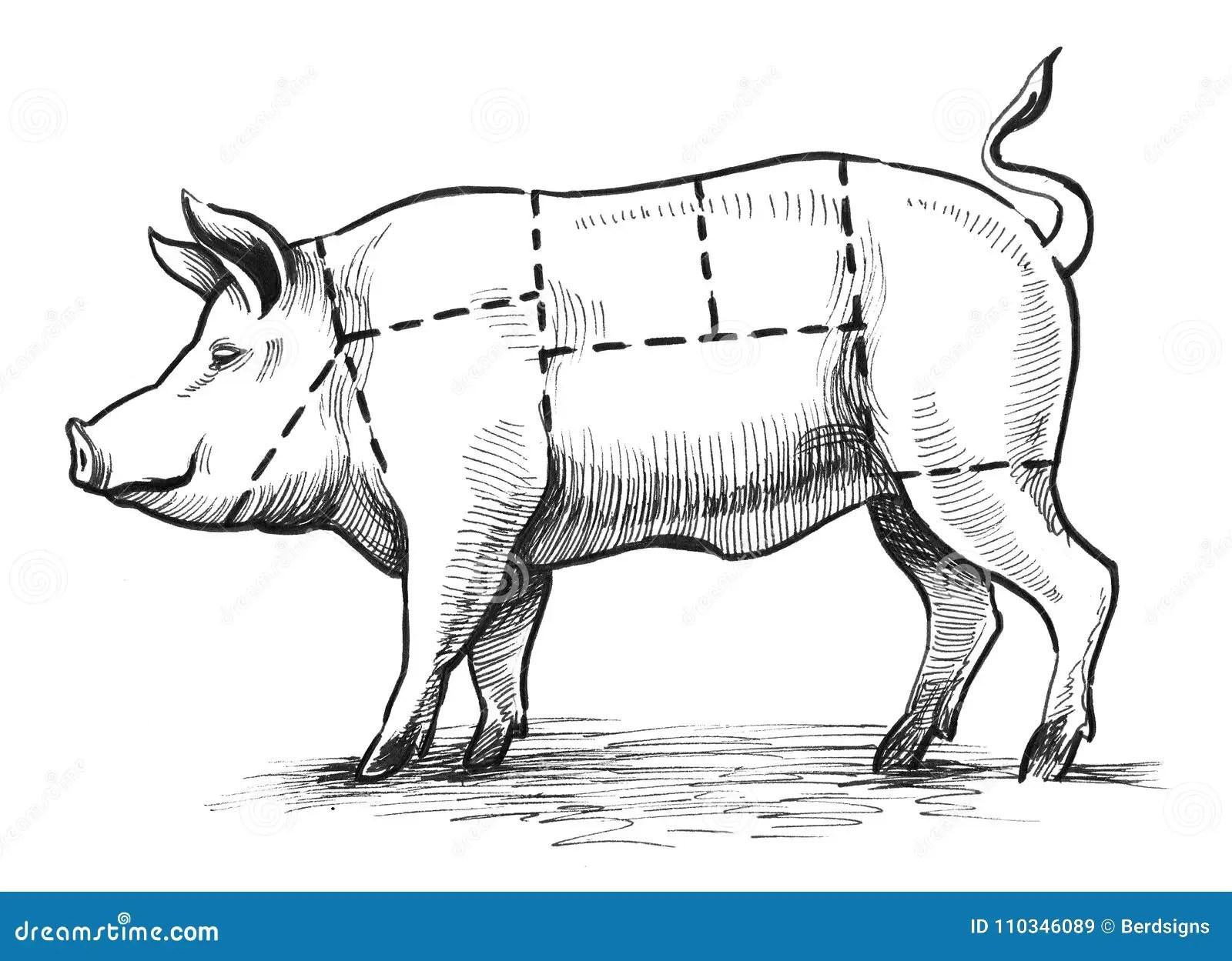 Pig Butcher Chart Stock Illustrations 345 Pig Butcher