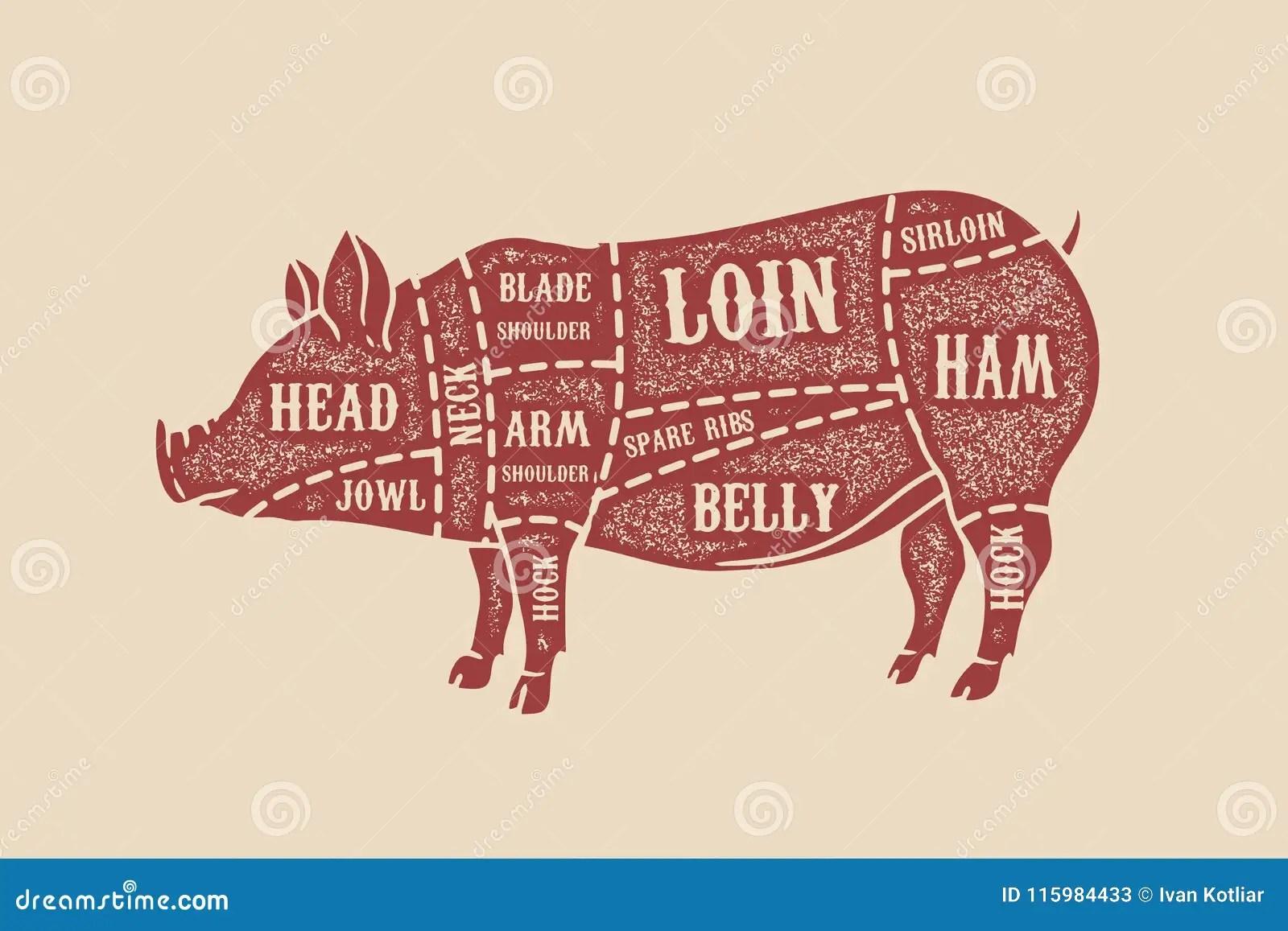 pig cuts diagram hopkins 7 blade wiring butcher pork design element for poster card emblem badge