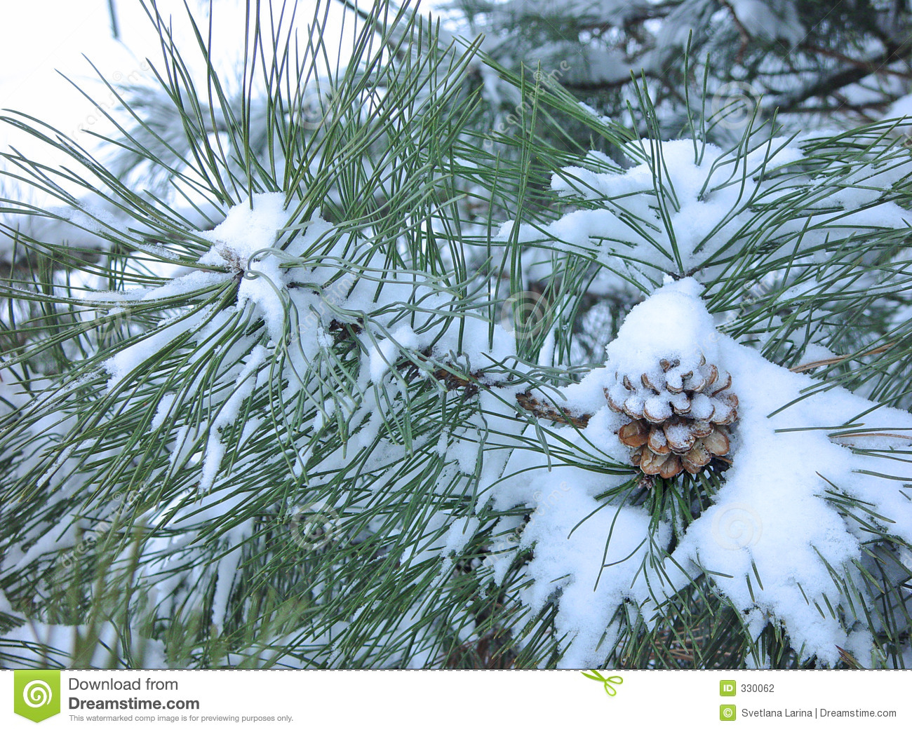 Xmas Tree Hd Wallpaper Pine Cone Covered In Snow Stock Photo Image Of Vacation
