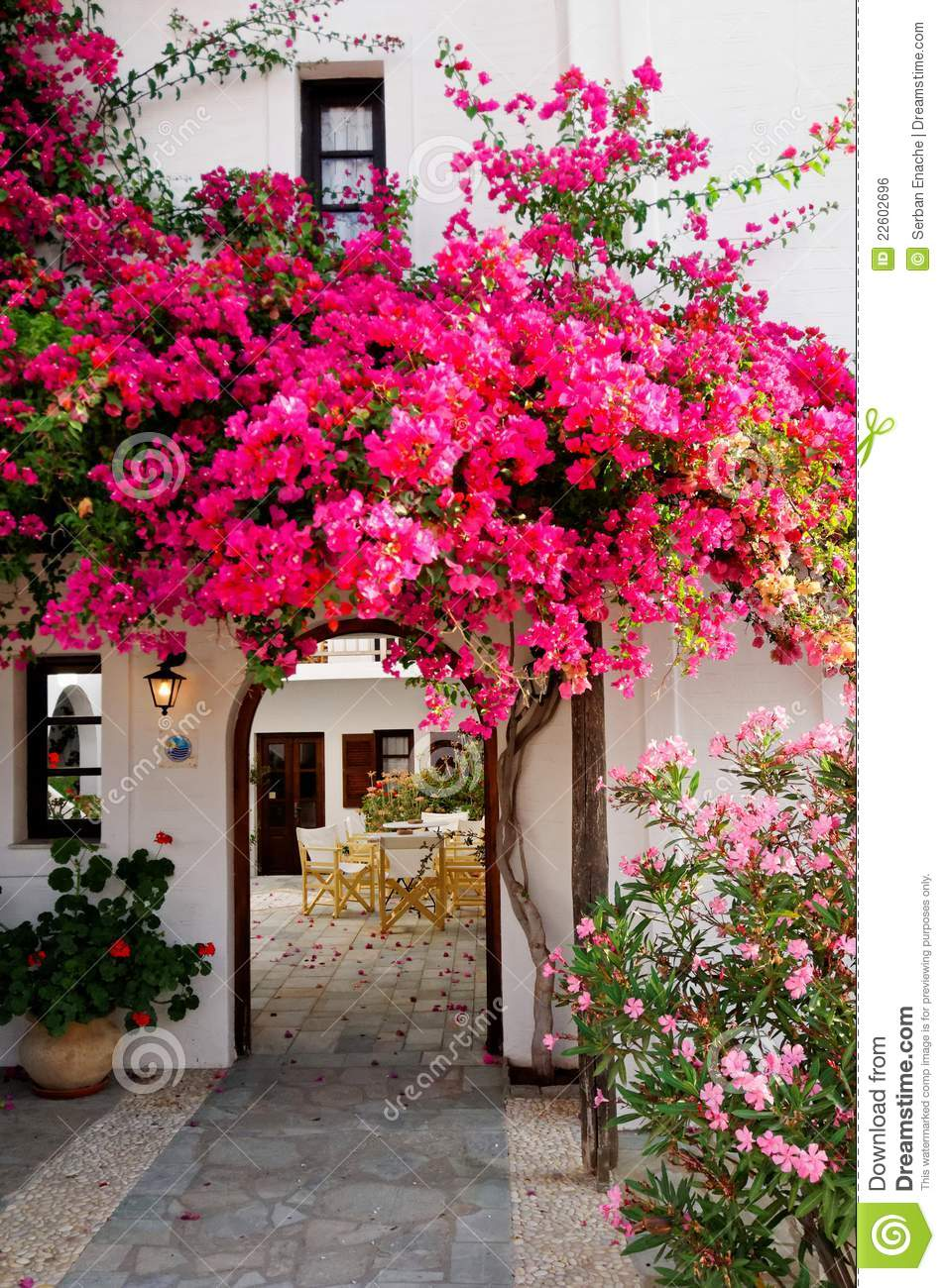 Royalty Free Stock Pink Bougainvillea